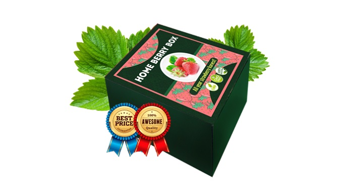 Home Berry Box hausgemachte Erdbeeren: unglaubliche Ernte von großen und leckeren Erdbeeren NUR IN 1 MONAT!